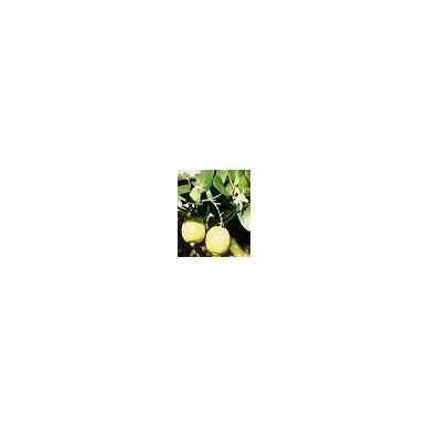Bergamočių eterinis aliejus, 10ml