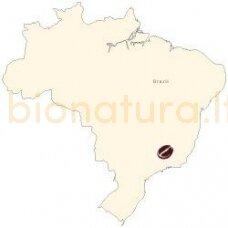 Brazil Yellow Bourbon Fazenda Rainha