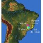 Brazil Sul de Minas NY 2 kava 2 kg.
