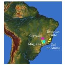 Brazil Sul de Minas NY 2 kava 250/1000gr.