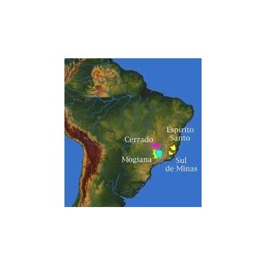 Brazil Sul de Minas NY 2 kava šviežiai skrudinta