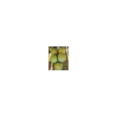 Makadamijų riešutų aliejus, šalto spaudimo, 100 ml. 2