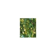 Nimbamedžio ( nimo ) aliejus, 100 ml.