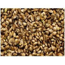 Pluoštinių Kanapių sėklos nelukštentos. 1 kg.
