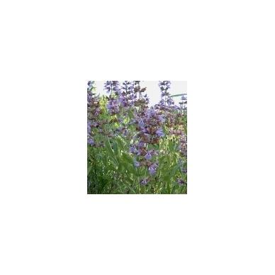 Šalavijų levandinių eterinis aliejus, 10ml